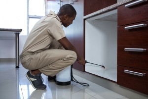 Pest Inspection, Pest Control in Beddington, SM6. Call Now 020 8166 9746