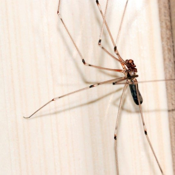 Spiders, Pest Control in Beddington, SM6. Call Now! 020 8166 9746